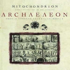 Mitochondrion — Archaeaeon (2008)